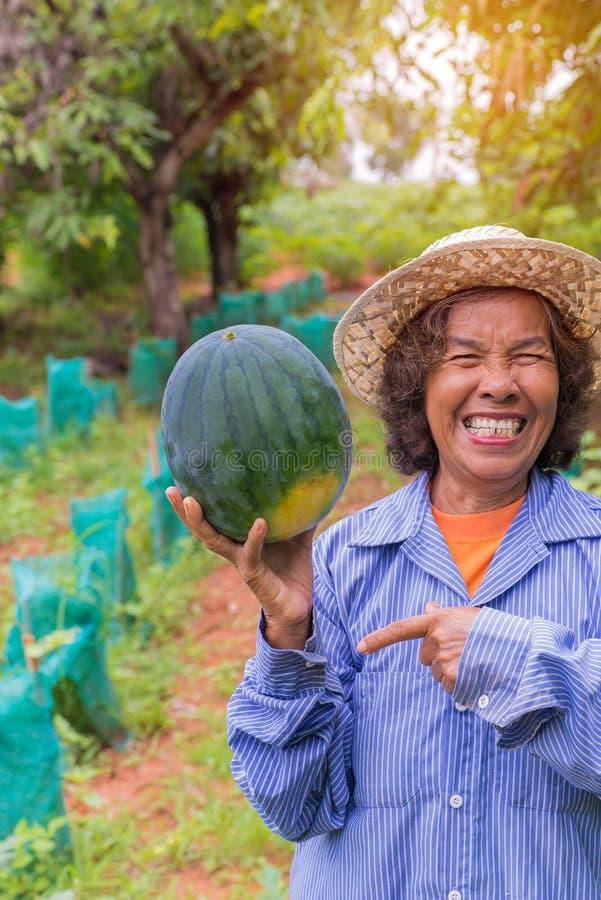 Pastèque supérieure de prise de femme d'agriculteur dans la ferme photo stock