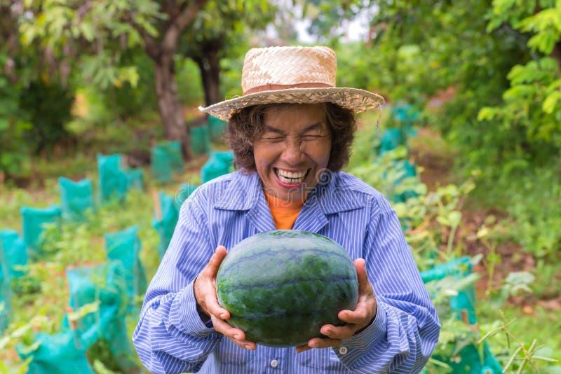 Pastèque supérieure de prise de femme d'agriculteur dans la ferme Foyer sur la pastèque photos libres de droits