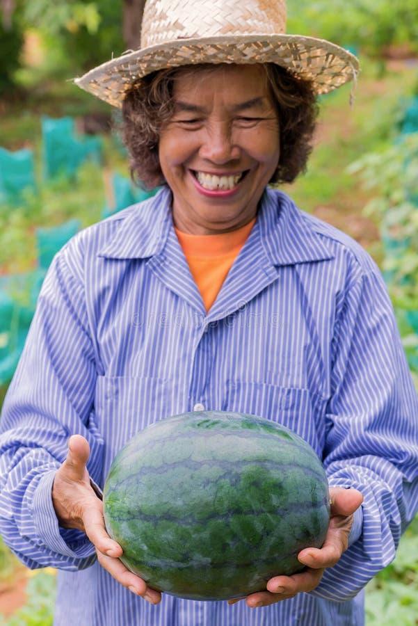 Pastèque supérieure de prise de femme d'agriculteur dans la ferme Foyer sur la pastèque image libre de droits