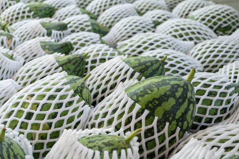 Pastèque verte image stock
