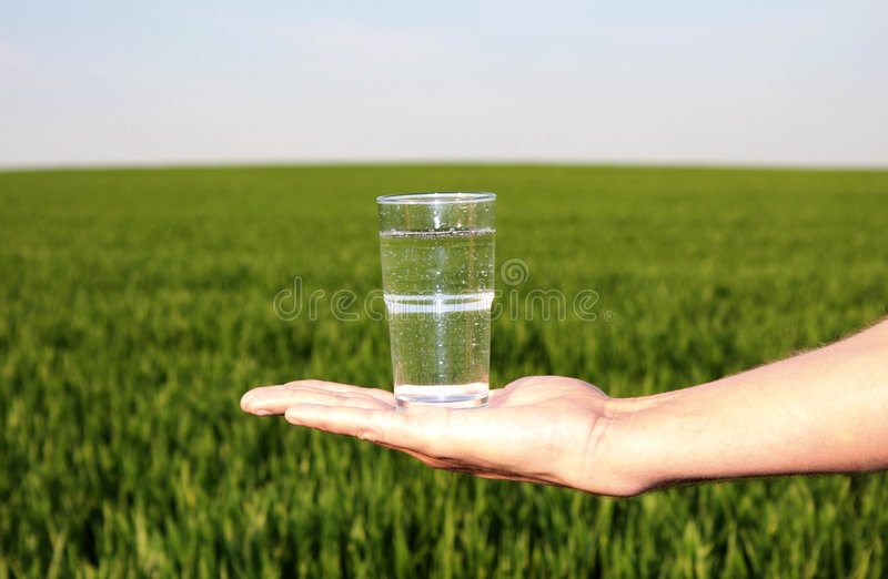 Pastagem da água bebendo fotos de stock