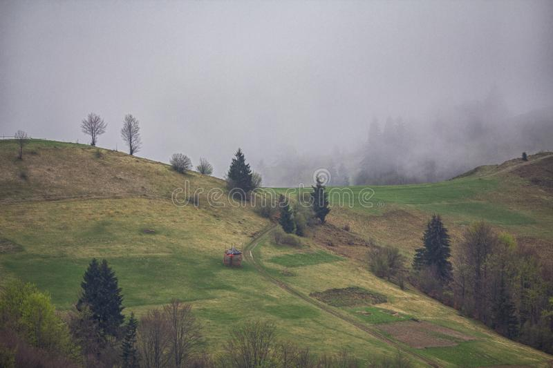 Pastagem da montanha com pastagem de vacas no pasto do ver?o carpathians imagens de stock