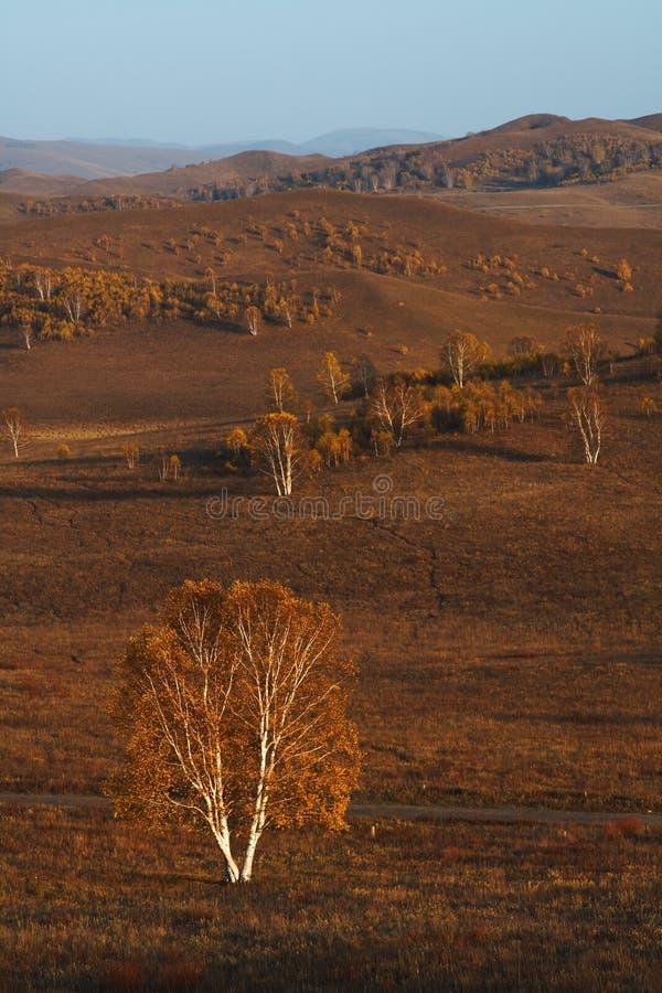 Pastagem de Bashang em Inter-Mongolia de China foto de stock royalty free