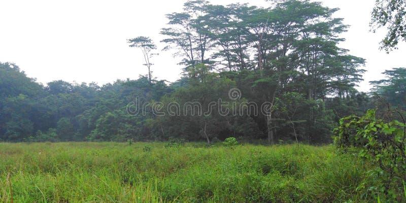 Pastagem e floresta em Singapura fotografia de stock royalty free