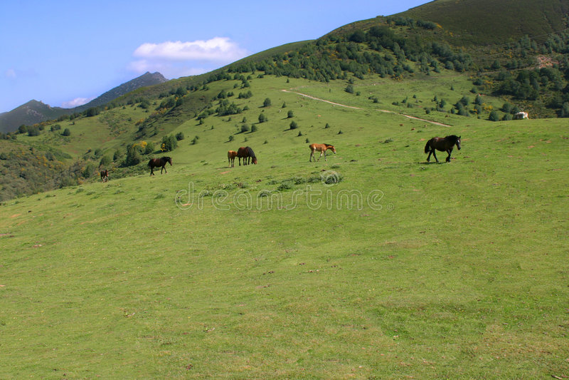 Pastagem nas Astúrias com cavalo imagens de stock