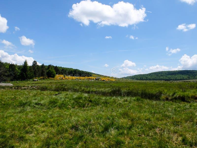 Pastagem nas montanhas de Cevennes, França fotografia de stock royalty free