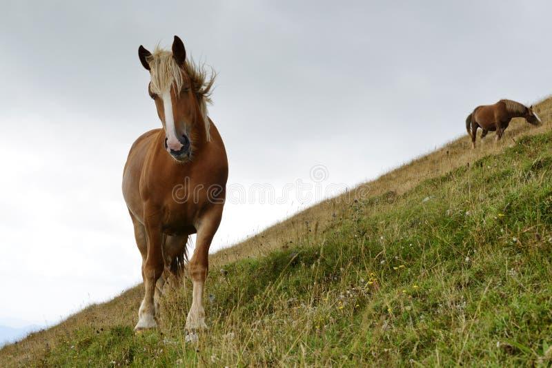 Pastando cavalos fotografia de stock