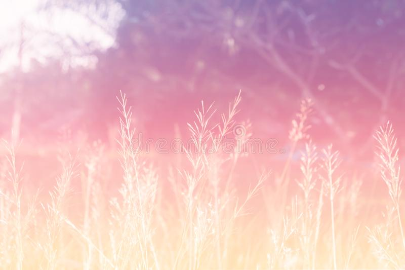 Pastel color grass flower soft focus nature background royalty free stock photo