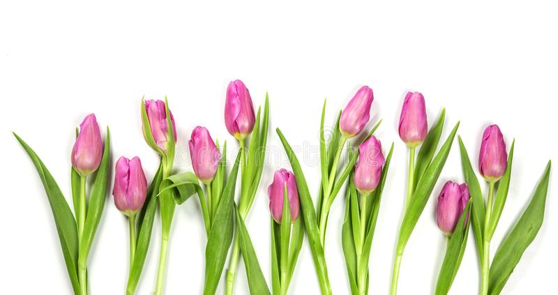 Download Pastel colored flower stock image. Image of background - 109096231