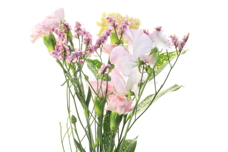 Pastel-colored flowers. Pictured pastel-colored flowers in a white background royalty free stock images