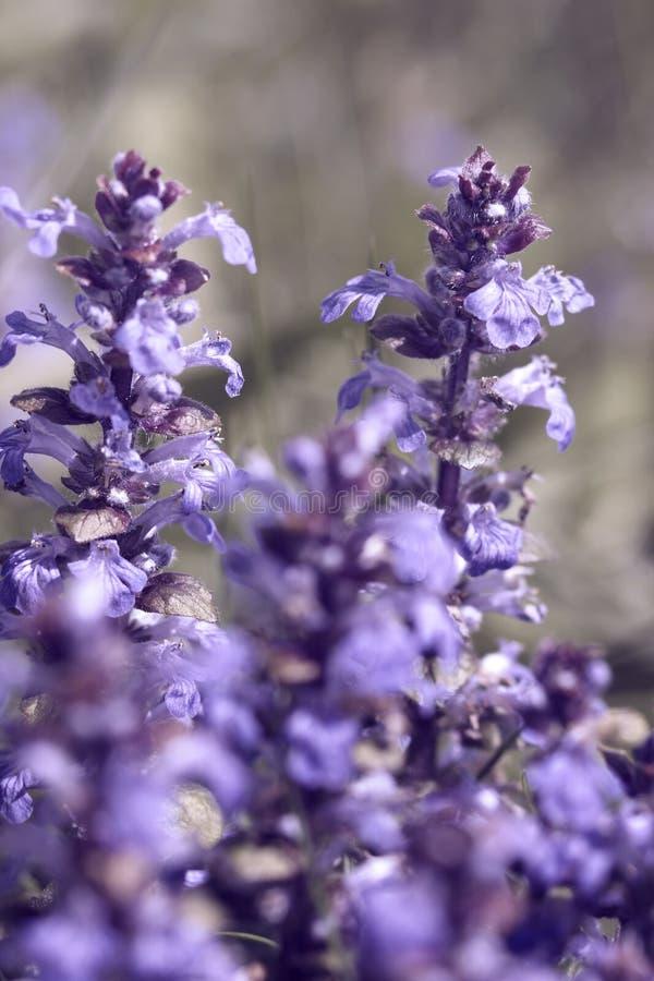 Pastel flower closeup stock photo