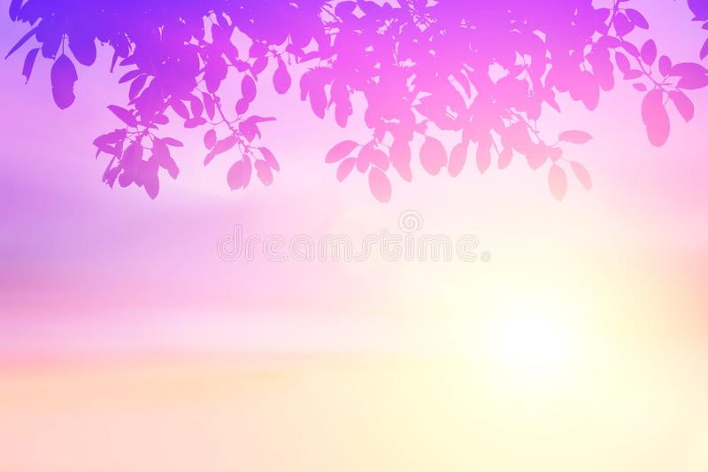 Pastel gradient blurred sky,sunset background with silhouette leaves foreground on soft focus sunshine bright peaceful morning sum royalty free stock photos