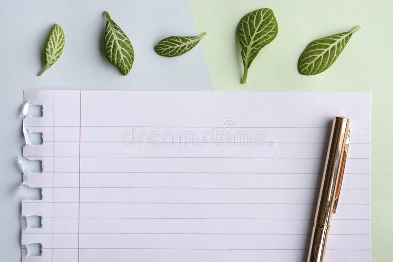 Pastel green blue background with lined paper, pen and green leaves.. Top view, lying flat. Space for text stock photos