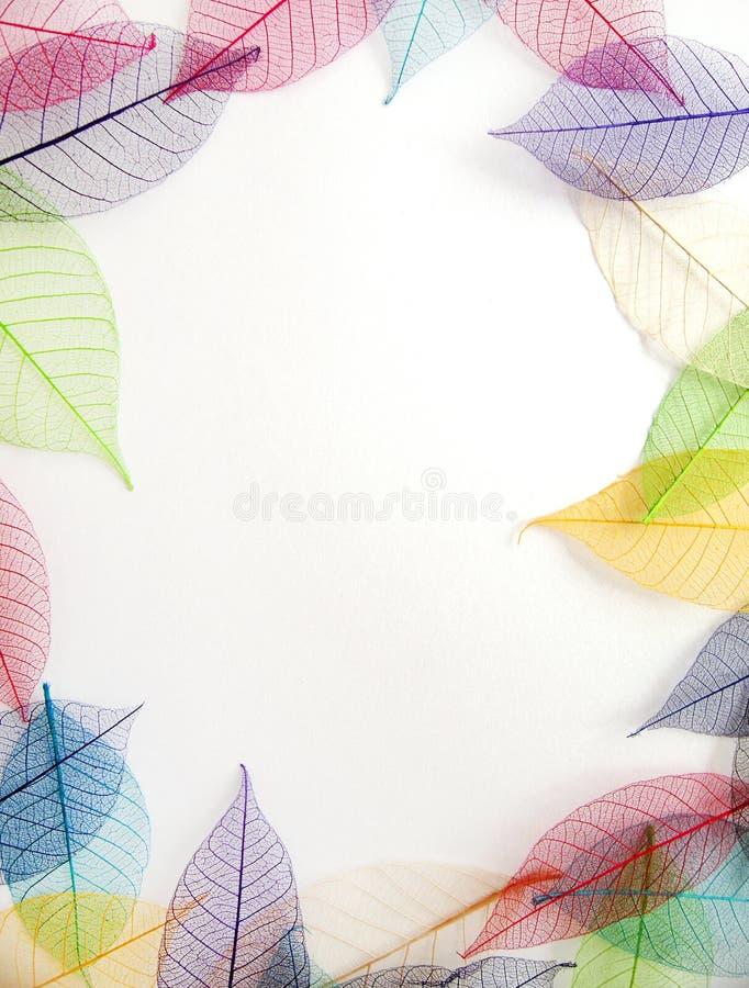Pastel leaves frame on white background royalty free stock photos