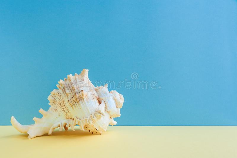 Pastel minimalism. One graceful seashell is lying on yellow surface on blue background. stock images