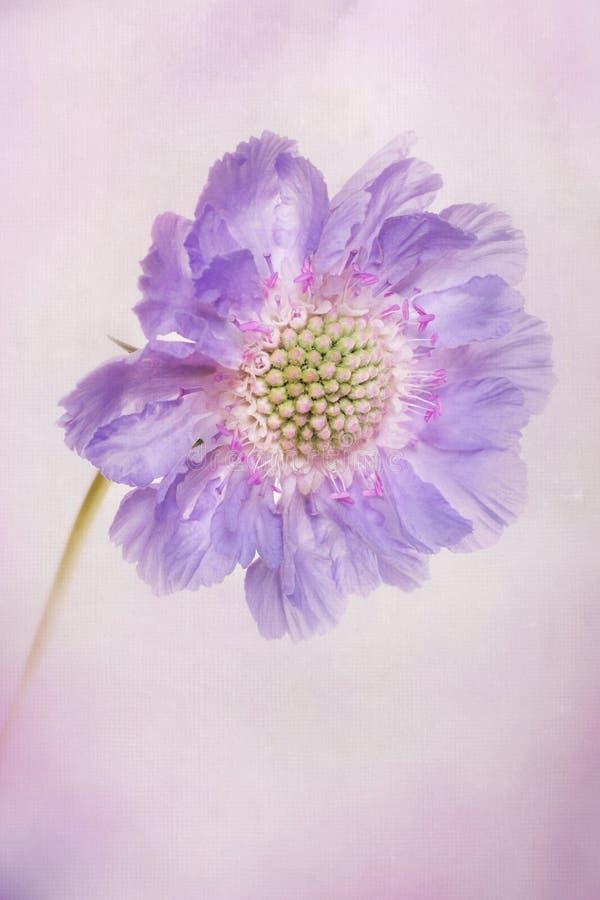 Download Pastel petals stock image. Image of watercolor, vintage - 34066085