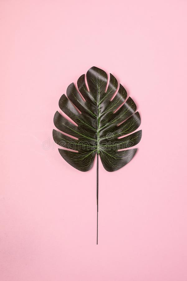 Pastel Pink Background with Singl Monstera Leaf Vertical Top View Tropical Summer Fashion Background stock photo