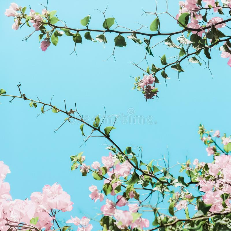 Pastel pink blooming flowers and blue sky in a dream garden, floral background royalty free stock photography