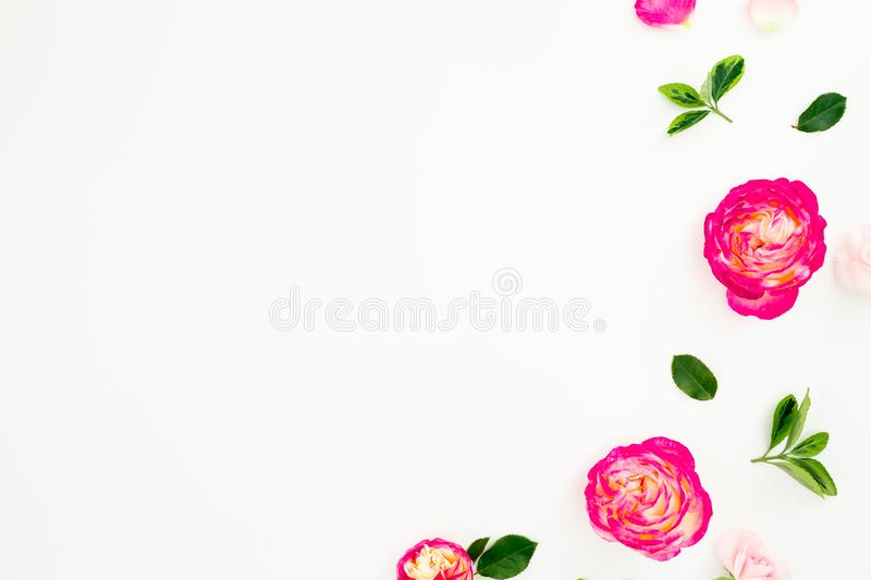 Pastel pink roses flowers and green leaves on white background. Flat lay, top view. Copy space royalty free stock images