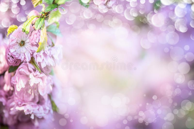 Pastel purple blossom background. Summer or spring. Outdoor nature background royalty free stock photography