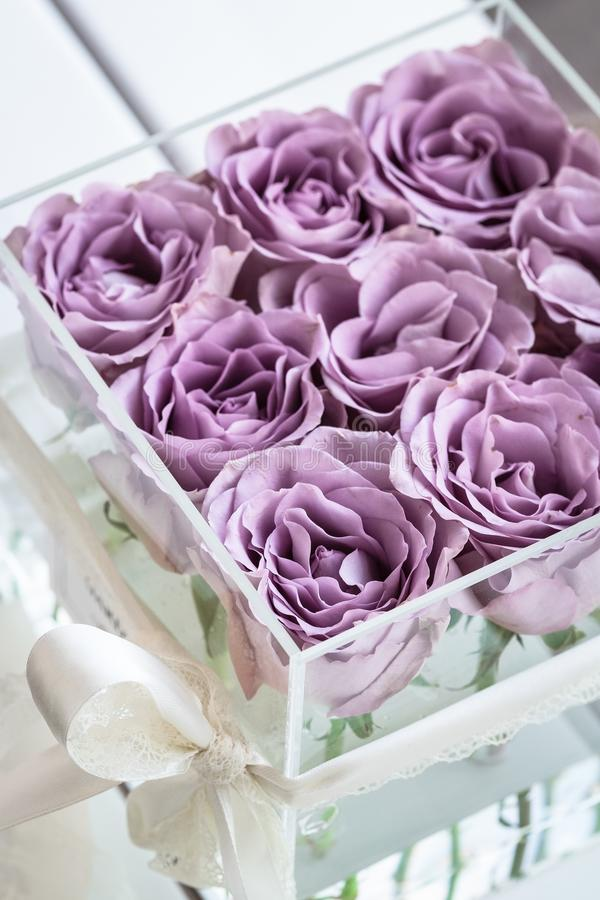 Pastel purple roses in clear acrylic box royalty free stock photography