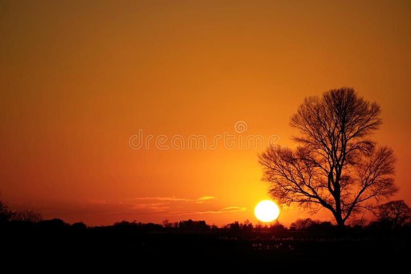 Pastel shades of sunset. Pastel shades of sunset with a willow tree silhouetted during late November in Lincolnshire UK stock image