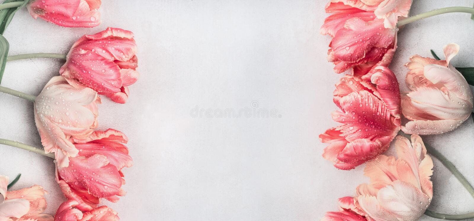 Pastel tulips flowers with water drops, top view, frame or banner. Layout or springtime greeting card for Mothers day,birthday stock photos