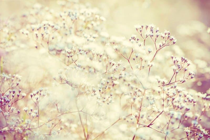 Pastelkleur gestemde bloemen royalty-vrije stock foto