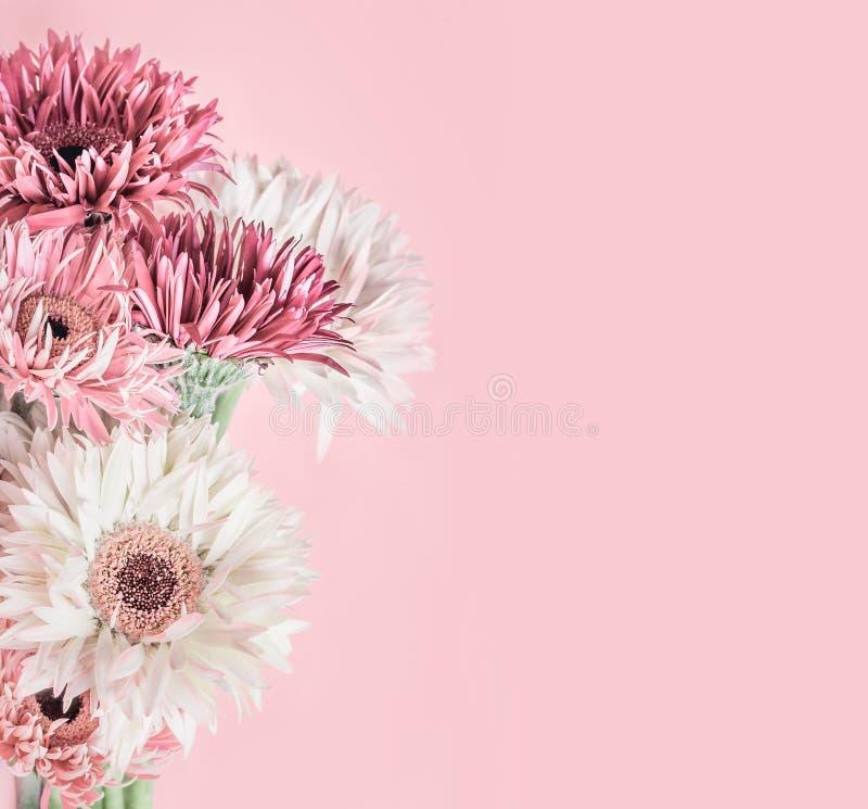 Pastelkleur roze bloemenachtergrond met aster, van Gerbera en van madeliefjes bloemen royalty-vrije stock foto's