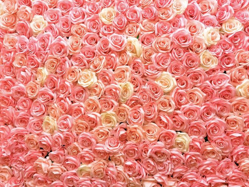 Pastelkleur van rozen op de muur Nuttig voor huwelijksdecoratie, behang en achtergrond stock fotografie