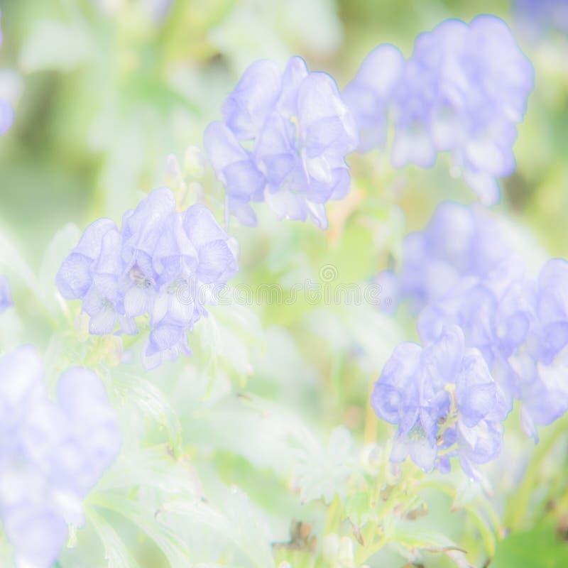 Pastell- und weicher Blumenhintergrund - blau, grün, gelb lizenzfreies stockbild