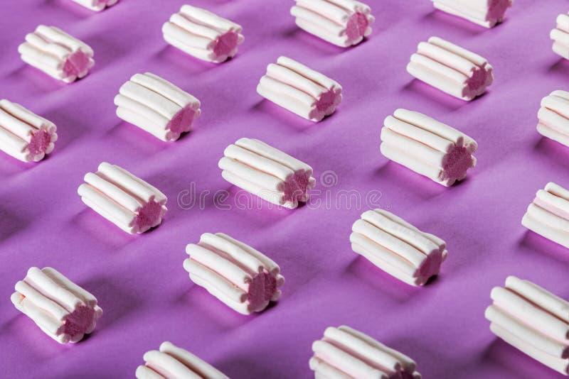 Pastellfarben des Eibisches auf einem lila Hintergrund stockbild