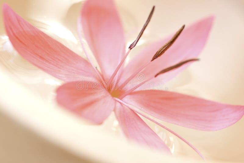 Download Pastelli immagine stock. Immagine di purezza, terapia - 3138583