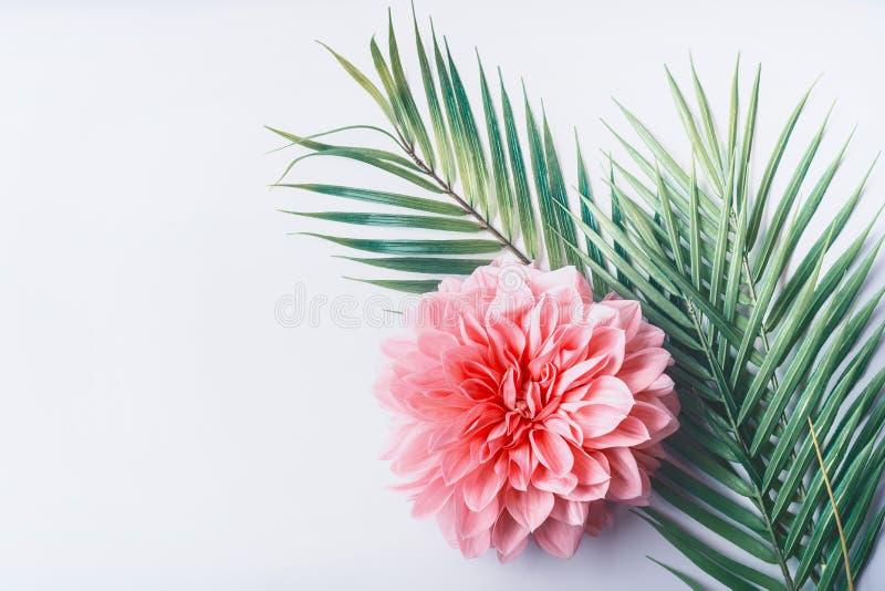 Pastellrosablume und tropische Palmblätter auf weißem Tischplattenhintergrund, Draufsicht, kreativer Plan mit Kopienraum lizenzfreies stockbild