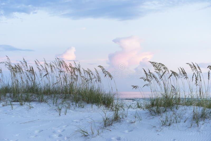 Pastellsonnenuntergang an der Florida-Strand-Szene mit Seehafern und weichem Colo stockfotos