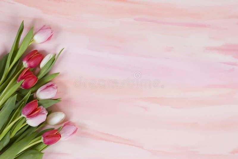 pastelowych menchii czerwonej wiosna tulipanów akwarela ilustracja wektor