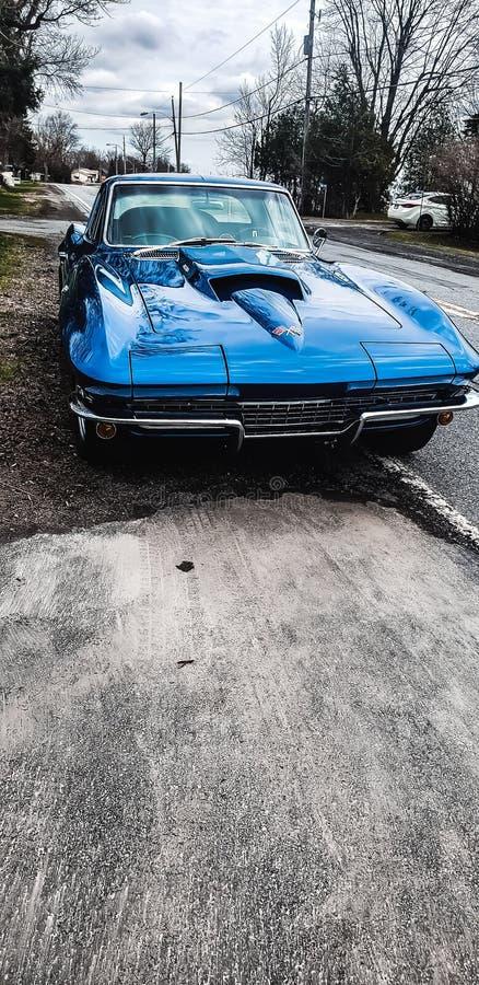 67 pastenagues de Corvette photo libre de droits