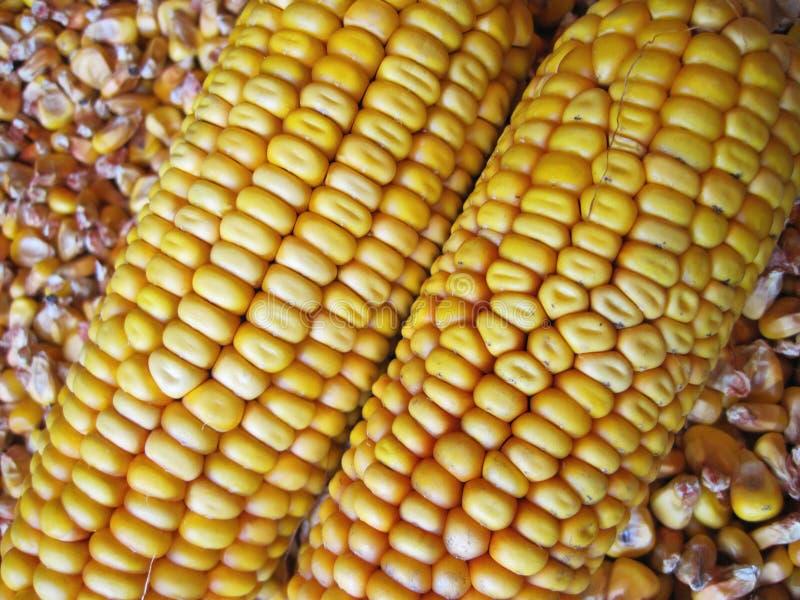 Pastewnej kukurydzy wzór obrazy royalty free
