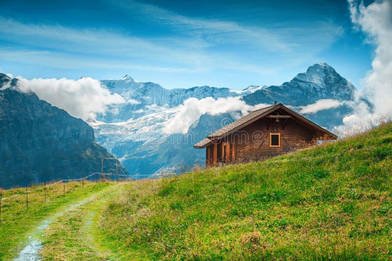 Pasto alpino del verano con las montañas nevosas en el fondo, Grindelwald, Suiza fotografía de archivo libre de regalías