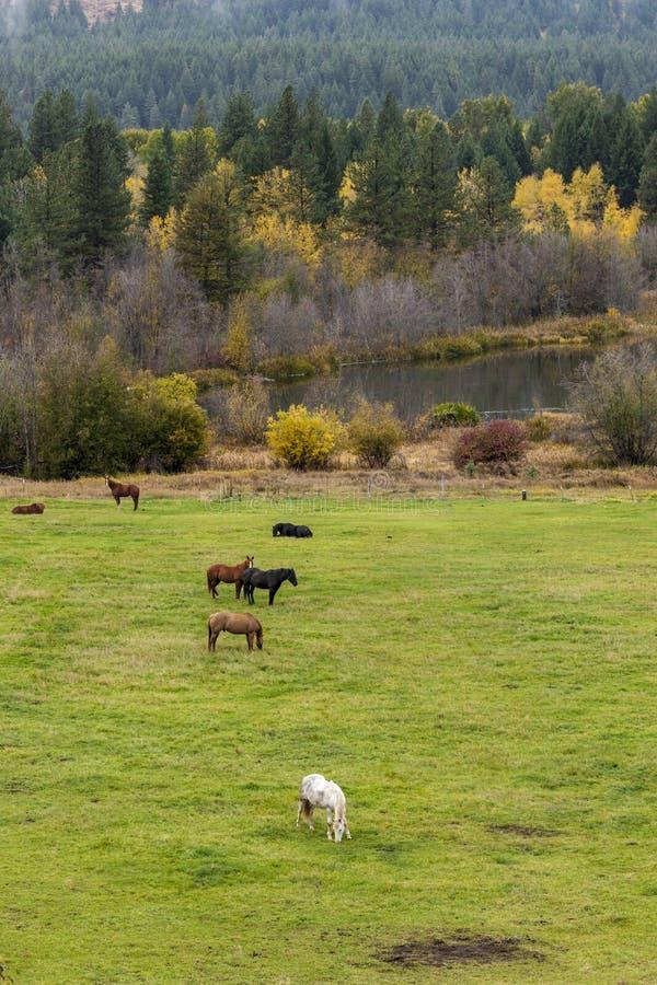 Pasto de caballos en prado imagen de archivo libre de regalías