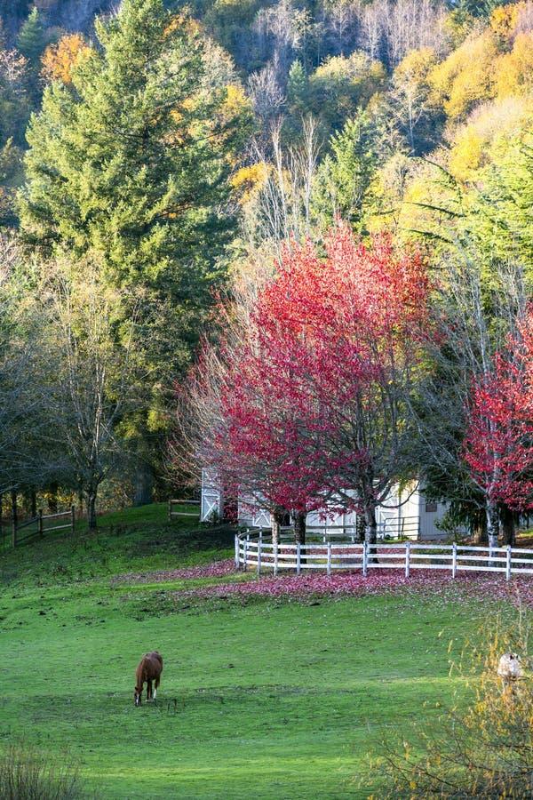 Pasto de caballos en prado pintoresco del otoño con los árboles y el stabl imágenes de archivo libres de regalías