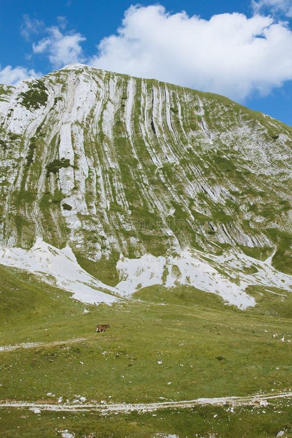 Pasto de la montaña imágenes de archivo libres de regalías