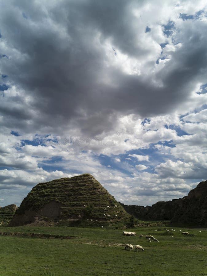 Pasto de ovejas en el valle fotos de archivo