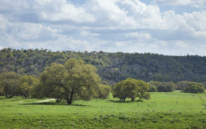 Pasto del rancho en Texas Hill Country en una tarde soleada imagenes de archivo