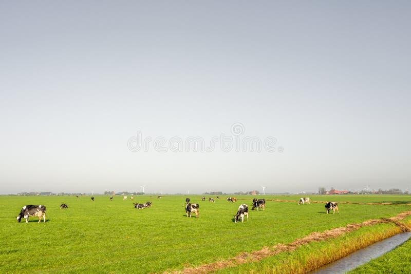 Pasto em Heeg em Friesland imagem de stock