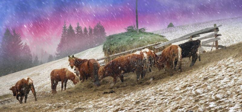 Pasto em um blizzard imagens de stock
