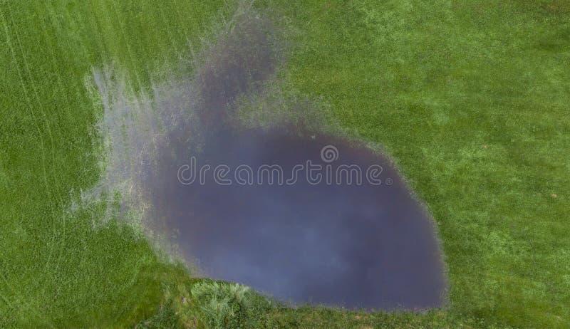 Pasto inundado após a chuva fotografia de stock royalty free