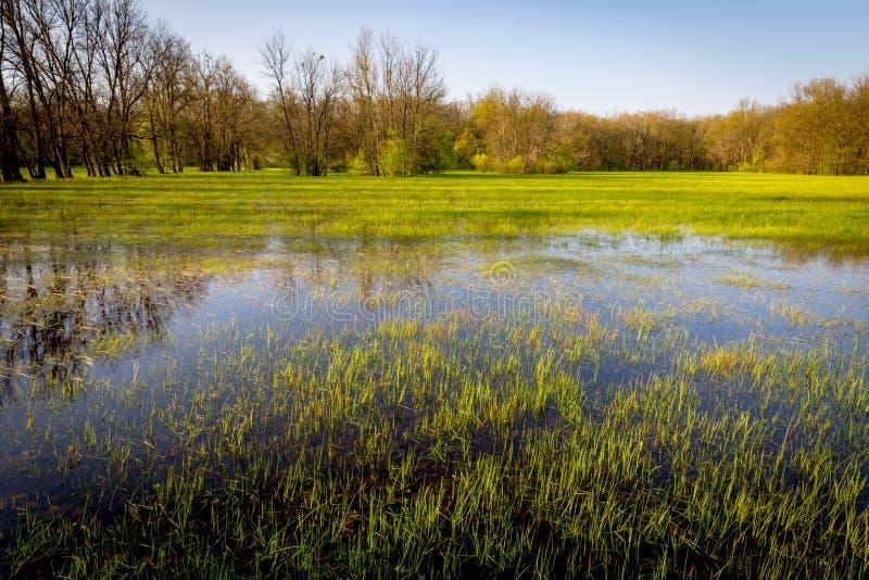 Pasto inundado na floresta foto de stock royalty free
