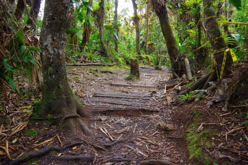 PASTO KOLUMBIA, LIPIEC, - 3, 2016: dżungli sceneria z niektóre drzewami lokalizować w losu angeles cotora wyspie roślinami i fotografia royalty free