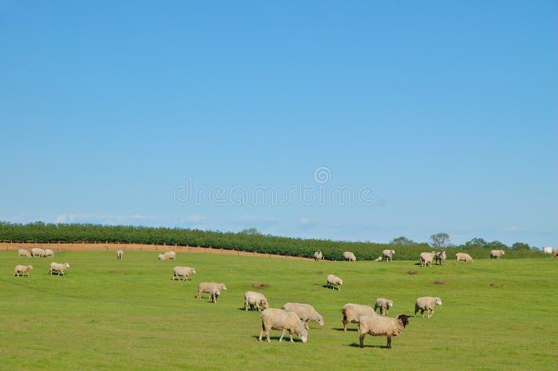 Download Pasto rural foto de archivo. Imagen de verde, farmland - 1284738